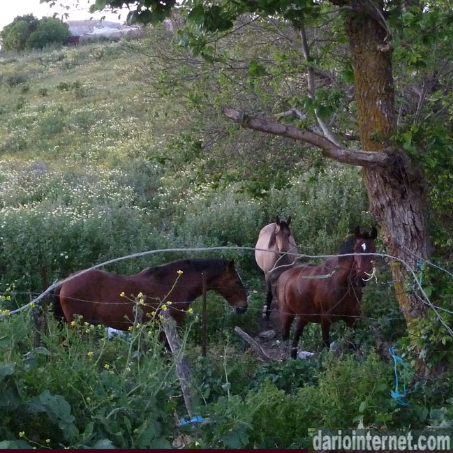 Horses in the wild in Vejer De La Fronera